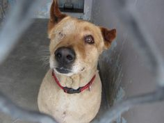 In BALDWIN PARK, CA 15 YR OLD CHOW CHOW MIX NEEDS IMMEDIATE RESCUE My name is Oso. I am a 15 yr old male brown Chow Chow mix. My owner left me here on April 10. Very friendly Still acts like a pup I share these photos to help get these dogs seen and perhaps find homes. I do not work for the shelter nor do I rescue, pull or do chipins. If you are interested in this dog, please contact the shelter directly to find out its availability.
