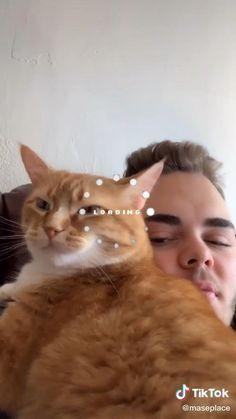 Funny Animal Jokes, Funny Animal Videos, Cute Funny Animals, Animal Memes, Funny Cute, Cute Cats, Funny Video Memes, Crazy Funny Memes, Funny Relatable Memes
