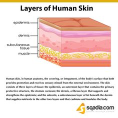 Medical Facts, Medical Advice, Skin Anatomy, Subcutaneous Tissue, Contact Dermatitis, Hair Follicles, Salon Business, Layers Of Skin
