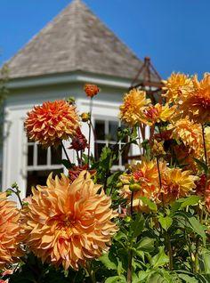 At Home on Clove Brook Farm with Christopher Spitzmiller - Quintessence Albert Hadley, Mario Buatta, Planting Bulbs, Four Seasons, Beautiful Gardens, Flower Arrangements, Orange, Flowers, Floral Arrangements