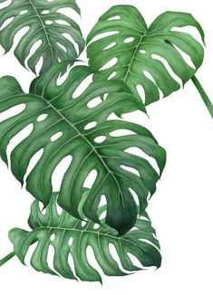 How Herb Back Garden Kits Can Get Your New Passion Started Off Instantly Tropical En Affiche Premium Par Typealive Juniqe Tropical Art, Tropical Leaves, Tropical Plants, Tropical Design, Art Mural, Wall Art, Wall Decal, Monstera Deliciosa, Leaf Art