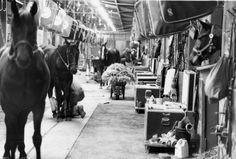 Horses at Greenwood Race Track, circa 1986.