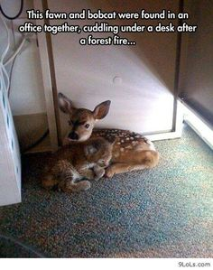 31 Hilarious and Sweet Funny Animal Pictures #funnyanimals #funnypictures #funnycats #animalmemes #funnydogs