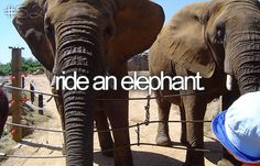 I did when I was a little girl, I absolutely love elephants and want to ride one again as an adult