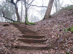hillside stairs | ... woodland walk in Whitlingham Country Park - a steep hillside
