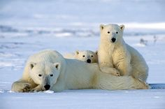 Churchill, Manitoba. It might be worth the cold to see this.