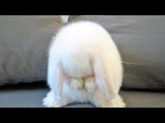 Cute Baby Bunny Washing Her Face