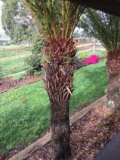 Trunks, Garden, Plants, Drift Wood, Garten, Tree Trunks, Lawn And Garden, Gardens, Plant