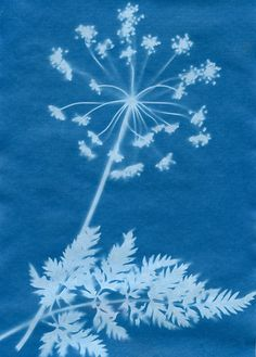Anna Atkins Photography ...Anna Atkins, a trained botanist , also sometimes known as the first woman photographer, used this process to print and publish her own book illustrated only by photography.