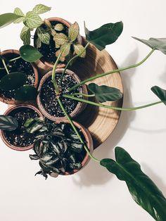 Teeny tiny baby plants