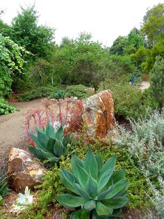 Southern California Native Plant Landscape Garden by M. Dolly, via Flickr