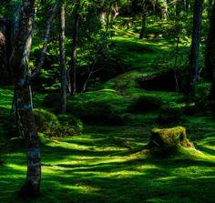 Moss garden, Japan