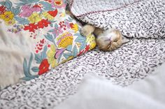 cat and pattern