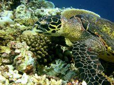 by FR Baginda @Maldives c/o 1CheekyChimp, via Flickr