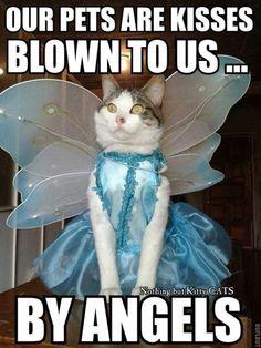 Cute angel cat.