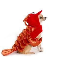 Thrills & Chills™ Pet Halloween Lobster Pet Costume | Costumes | PetSmart