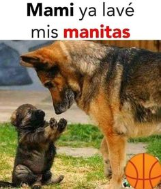 I suppose you may need dog training hacks. Open the link to learn more on this subject! Shih Tzu Hund, Shih Tzu Dog, All Dogs, Dogs And Puppies, Animals And Pets, Cute Animals, Cute Animal Pictures, Dog Memes, Funny Memes