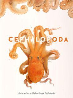Cephalopoda in Art