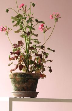 Flower styling - photo Gitte Christensen 2