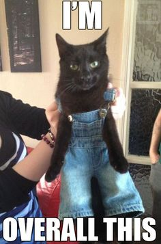 OVER ALLS ,REALLY MAN
