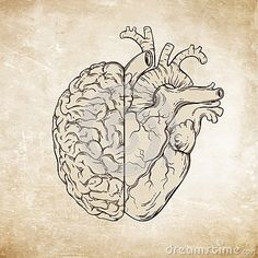 Hand drawn line art human brain and heart. Da Vinci sketches style over grunge aged paper background vector illustration