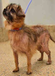 SHANNY (A1834843) I am a female tan and black Terrier mix. The shelter staff think I am about 8 years old. I was found as a stray and I may be available for adoption on 12/09/2016. — Miami Dade Animal Services Pet Adoption and Protection Center. https://www.facebook.com/urgentdogsofmiami/photos/a.474760019225073.115405.191859757515102/1373482446019488/?type=3&theater