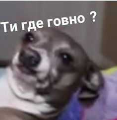 Best Tutorial and Ideas - Funny Video Memes, Cute Memes, Hello Memes, Russian Memes, Funny Mems, Fun Live, Teenager Quotes, Wholesome Memes, Meme Faces