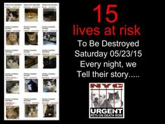 TO BE DESTROYED - 05/23/15 - - Info To rescue a Death Row Cat, Please read this: - Click for info & Current Status: http://nyccats.urgentpodr.org/tbd-040915/