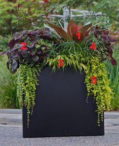 2012 Container Design Challenge Results: Fantastic Foliage - All About Tall Outdoor Planters, Outside Planters, Big Planters, Planter Pots, Container Flowers, Container Plants, Container Gardening, Succulent Containers, Container Design