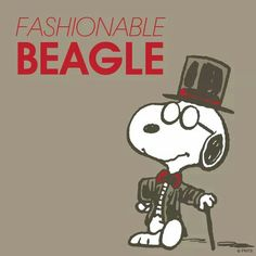 Fashionable Beagle