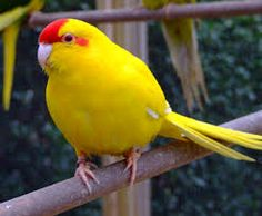 5 Things That May Surprise You About Parrots Exotic Birds, Colorful Birds, Best Pet Birds, Budgies, Parrots, Lovely Creatures, Game Birds, Birds Of Prey, Bird Species