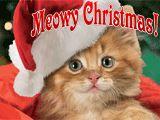 Meowy Christmas! - American Greeting