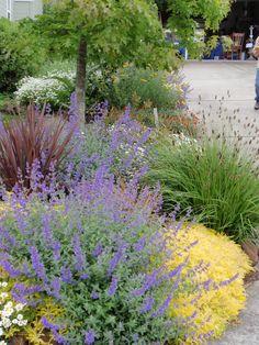 Lawn Replacement - BBY - Sue's Garden - An Artful Renovation Outdoor, Garden Crafts, Plant Sale, Backyard Garden, Master Gardener, Ornamental Plants, Garden Tours, Outdoor Gardens, Backyard