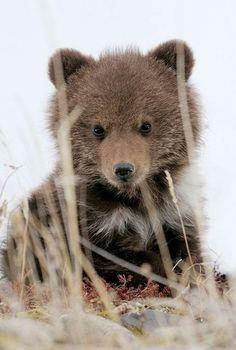 baby bear. How cute! Wait til he grows up. Believe me. I've seen...