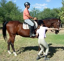 Teach Your Horse To Back Up With Balance and Impulsion