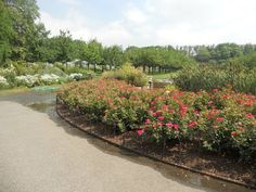 Brooklyn Botanical gardens, pictures taken by me.