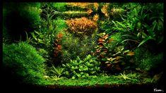 Planted Tank Aquajungle by Yam. Moumeni - Aquascape Awards