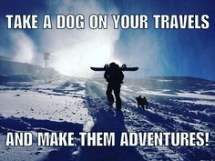 Take a dog on your travels. And make them adventures! #dogsofinstagram #snow #adventure