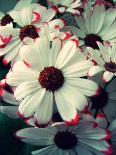 Lovely Red & Green Toned Daisies