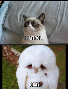 Remember the world's saddest owl???? Forgot how cute the little guy is.Top 49 Most Funniest Grumpy Cat Quotes