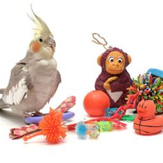 Pet birds love to play with bird toys, but if your parrot is reluctant to play, try these tips to get your pet bird playing.