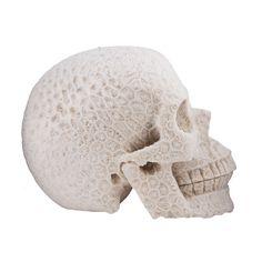 white coral carved skull