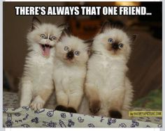 I am totally that one friend!!!