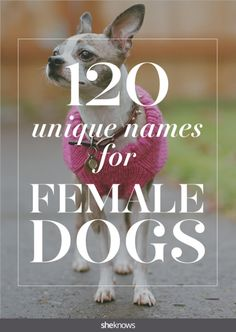 Fun, funny and funky girl dog names for woman's best friend Female Dog Names List, Best Girl Dog Names, Unique Female Dog Names, Girl Dog Names Unique, Cute Girl Dog Names, Pet Names For Dogs, Puppies Names Female, Dogs Names List, Funny Dog Names