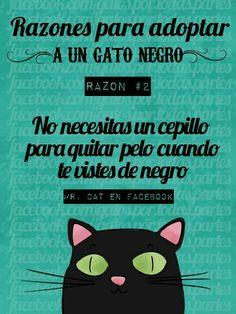 Razones para Adoptar un Gato Negro #2