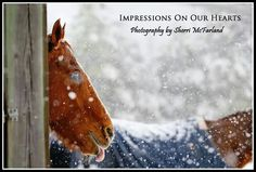 ❦ 'Impressions On Our Hearts' - Photography by Sherri McFarland - Equine Photography Network
