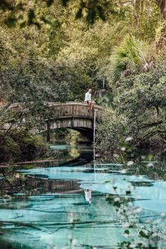 Juniper Springs Recreation Area Florida Photography Tubing Kayaking Alligator Attacks Camping Information Manatees and much Juniper Springs Florida, Florida Springs, Florida Beaches, Florida Vacation, Florida Travel, Florida Trips, Florida Girl, Family Vacation Destinations, Family Vacations