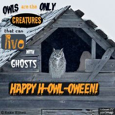 This time of year you may hear many superstitions about owls. One such story states that seeing an owl in a barn meant that it was haunted. No other creature would dare inhabit a building with ghost. Most likely, though, the lack of other creatures was due to the presence and feeding habits of a predatory raptor. Owl lore goes back many hundreds of years. Happy h-owl-oween!