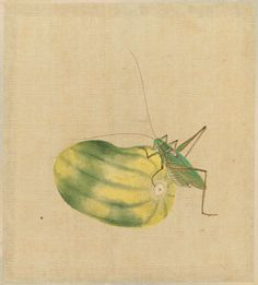 Grasshopper and Melon from the album Birds and Flowers.  Japanese, Edo period, first half of the 19th century