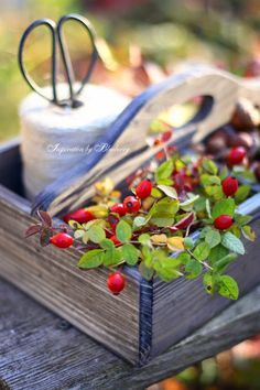 Blueberry: Autumn Berries